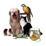 Mascotas_CentroShopOnline